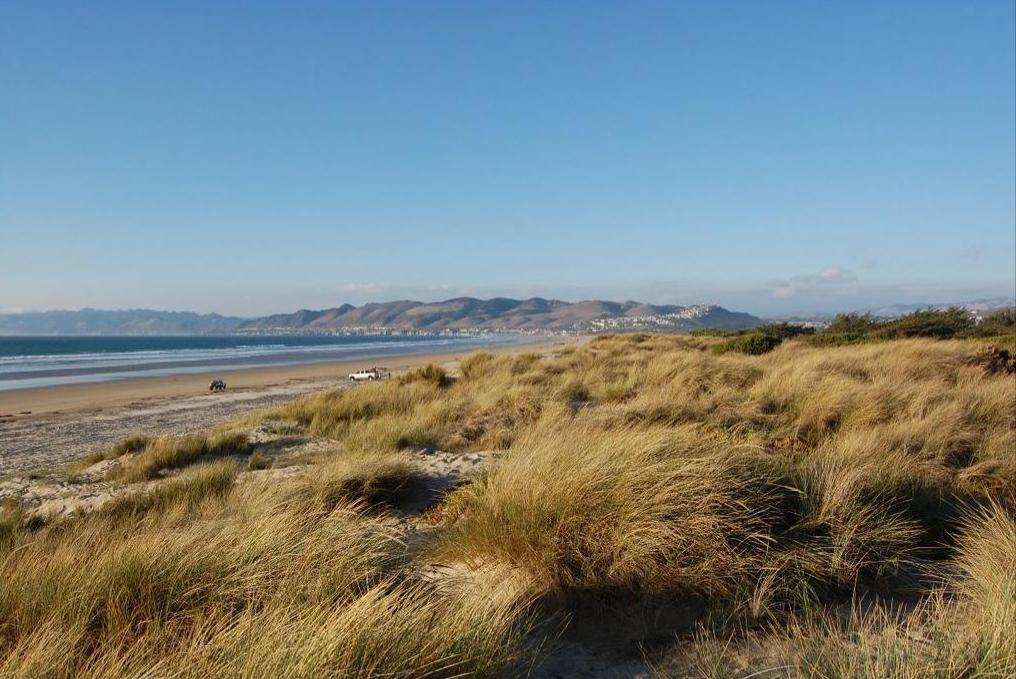 Beach and Sand Dunes in  Pismo State Beach in Oceano, California