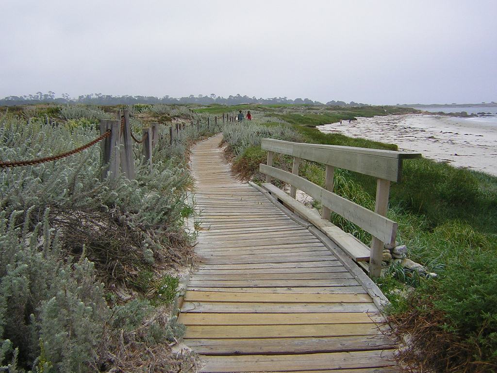 Asilomar State Beach Park in Pacific Grove, California